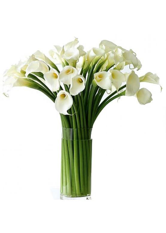 51 белая калла в вазе