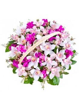 Любимые орхидеи