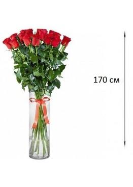 Розы высотой 170 см., поштучно от 5 штук