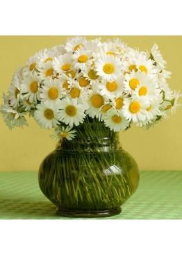 75 садовых ромашек в вазе